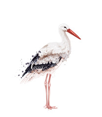 Stork Vector watercolor isolated on white. Icon Painted style illustrations