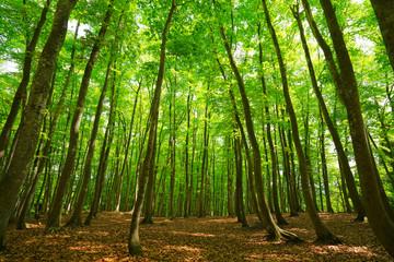 Beautiful green forest, Niigata, Japan