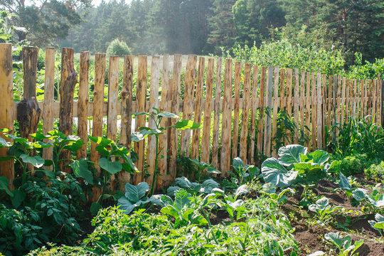 fenced vegetable garden