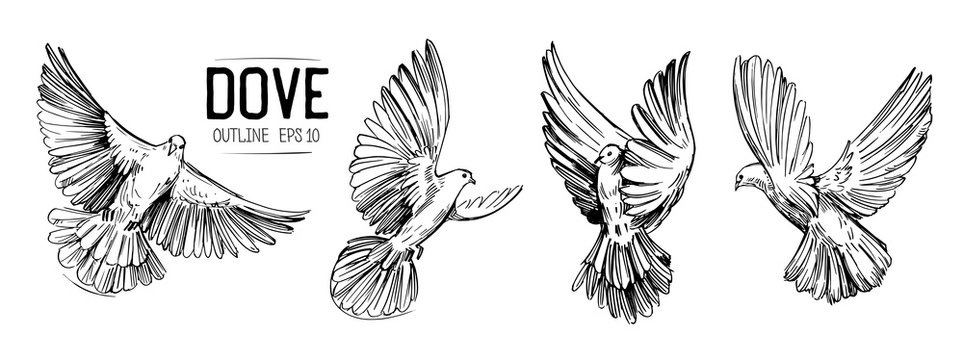Sketch of a flying dove. Hand drawn illustration converted to vector