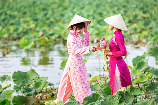 Water lilies on hand. Two Vietnamese woman on a wooden boat and collecting lotus flowers. Female boating on lakes harvest Pink Lotus flower. The flooding season there are many water lilies.