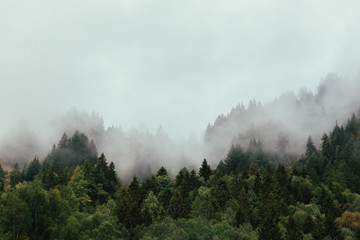 Forest with dense fog in the morning. Fototapete