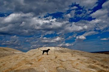 Dark dog on light colored hill