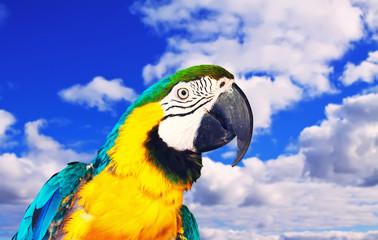 Head of macaw against sky Fotomurales