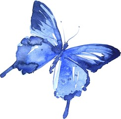 Watercolor colorful butterflies, isolated on white background, blue butterfly illustration.