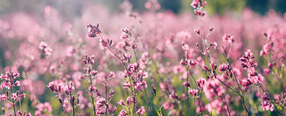 Natural summer landscape with pink flowers in the meadow at sunny day