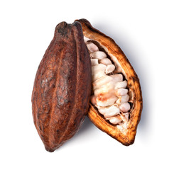 Cocoa pod on a white background