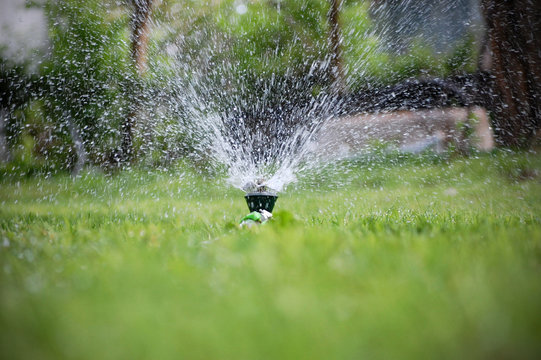 Surface level shot of a sprinkler watering the lawn.