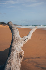 Old tree on a beach