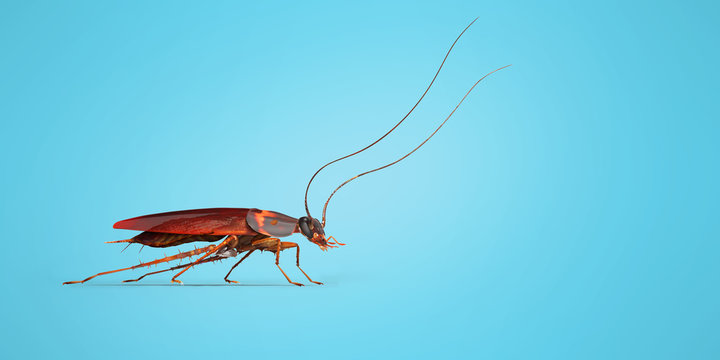 Cockroach crawling to the right 3d render on blue background with shadow