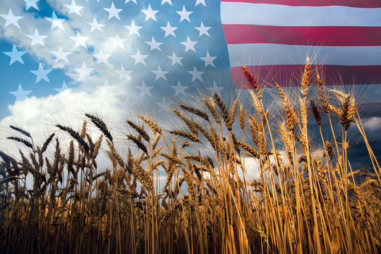 Double exposure with the american flag and  wheat.