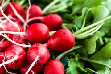 Fototapeta Freshly harvested red radishes, background. Fresh organic radish bunch. obraz