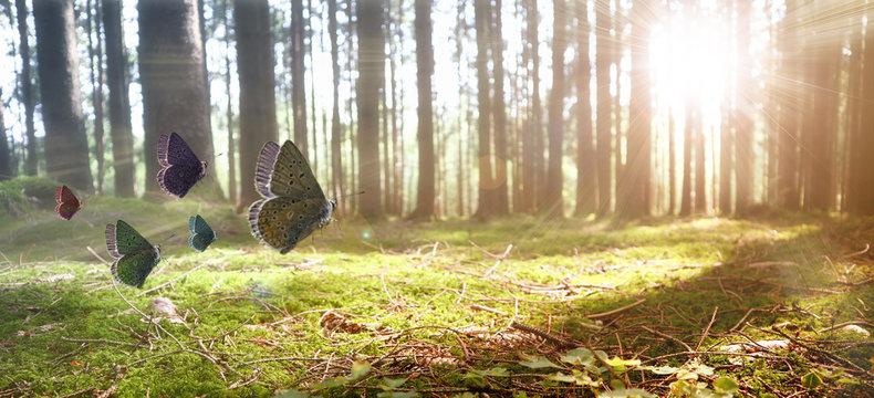 Schmetterlinge im Wald