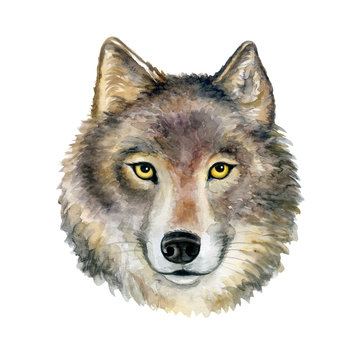 Wolf profile watercolor illustration. Realistic wolf isolated on white background. Template. Close-up. Clip art. Hand drawn. Clip art.