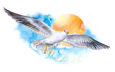 seagull on the fly isolated on white background. Flying bird. Watercolor. Illustration. Template. Close-up. Clip art. Hand drawn. Hand painted