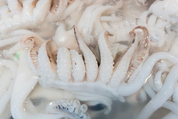 Fresh squid from fresh sea
