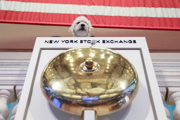 Theo the Mini Golden Doodle is held up on the podium over the bell at the start of the day's trading for the Chewy Inc. IPO at the New York Stock Exchange (NYSE) in New York City