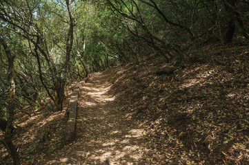 Dirt path in the forest amid bushes and trees