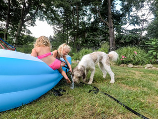 little girls helping their dog drink water from the hose on a hot day
