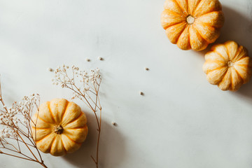 Autumn flat lay with small pumpkins on a white background. The concept of October , mockup, top view.