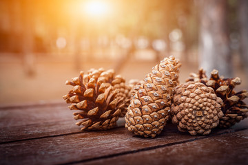 group of pine cones on wooden picnic table at park