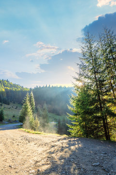 country road through forest in mountains. nature scenery with glowing for in rising sun rays. spruce trees by the path. sunny weather with some clouds