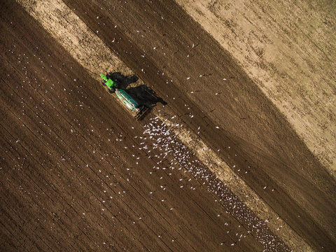 Aerial view of a tractor plowing soil surrounded by birds.