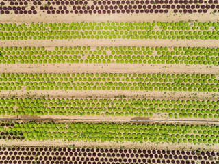 Abstract aerial view of lettuce agriculture in Correze, France.