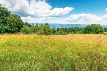 grassy glade on the edge of the forest. lovely summer scenery on a bright sunny day.  beautiful cloudscape on a blue sky. mountain range in the distance