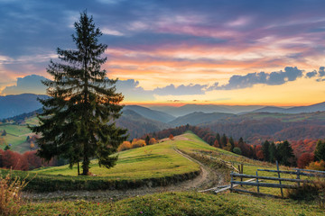 autumn countryside in mountain at dusk. dirt road down the hill in to the distant forest. spruce tree near the wooden fence on the grassy meadow. mountain ridge on the horizon. colorful cloudy sky