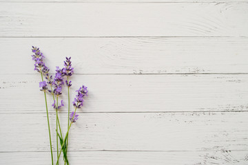 Composition of lavender on white wooden background. Fresh summer flowers. Free space