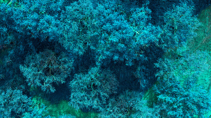Detail of a group of plants and marine algae in the Tyrrhenian Sea. The water is clean and blue and there are no fish.
