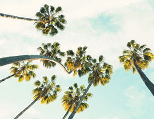 Wall Mural - Tropical palm trees on  summer sky background.  Toned image.