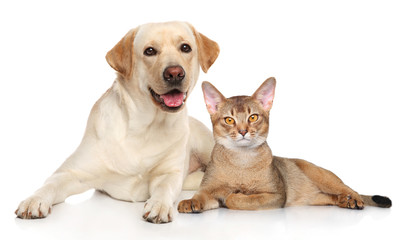 Cat and dog together Wall mural