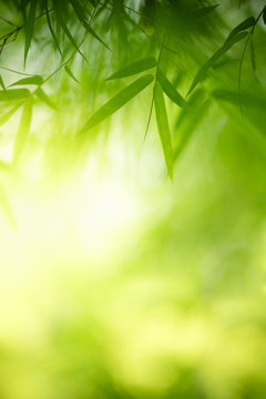 Nature of green bamboo leaf in garden using as background natural leaves wallpaper