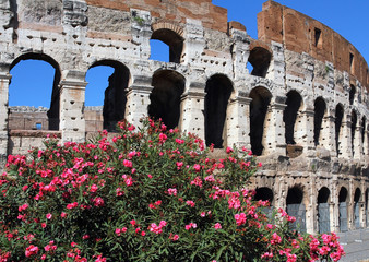 Oleander flowers and Colosseum in Rome Italy