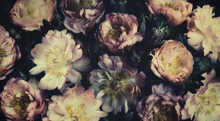 Vintage bouquet of beautiful peonies on black. Floristic decoration. Floral background. Baroque old fashiones style. Natural flowers pattern wallpaper or greeting card Wall mural