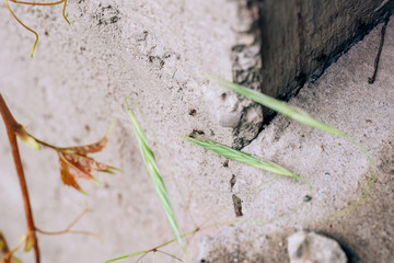 Black ants on the concrete wall. Ants in the home garden. Small vrelitele with the garden. Ant colony in the house