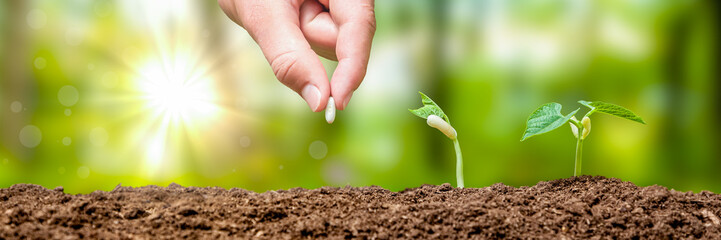 Fresh Growing Plants Concept
