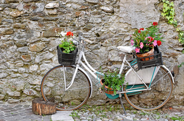 Old Bicycle with Flowers - Trentino - Italy