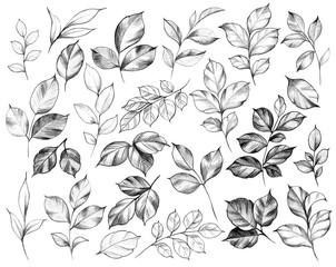 Hand Drawn Set of Various  Leaves