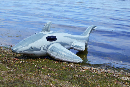 Inflatable shark toy with teeth on seaside beach sand next to coast line and water in summer day. Children toys for summertime vacation outdoor activities.