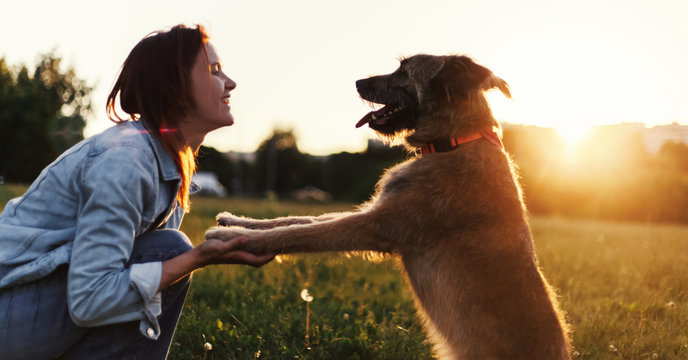 Beautiful fluffy shaggy dog gives paw to its owner in the setting sun