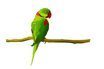 Cute green bird. Vector image. Bird: Alexandrine Parakeet. Psittacula eupatria.