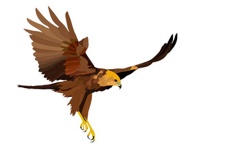 Bird of prey. Flying bird. Bird landing. Vector image. White background.  Wall mural