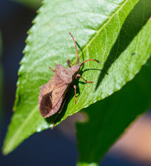 The bug on the plant in the park