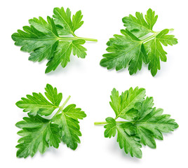 Parsley. Parsley isolated. Collection.