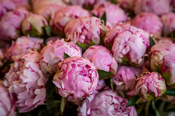 A full frame photograph of beautiful pink peonies for sale on a market stall