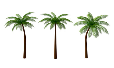 Set of green palm trees isolated on white background. 3d rendering Wall mural