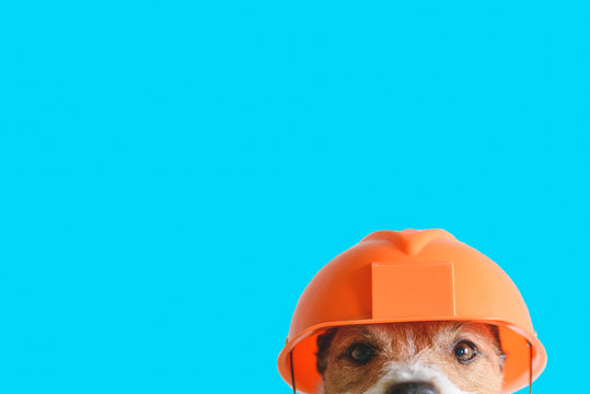 Safety, construction, DIY concept - cute dog in hard hat on color background